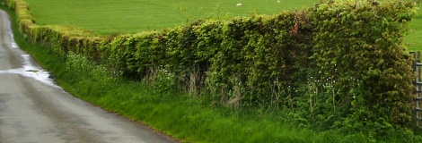 habitat-surveys-hedgerows2